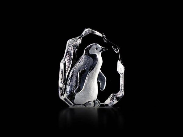 Maleras Wildlife Penguin